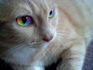 Rainbow_cat2