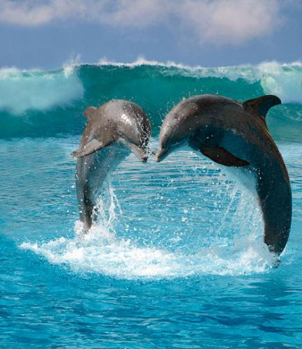 Dolphins Coming Together in Joyful Love