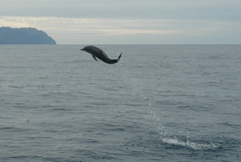 Dolphin Leaps high in the air with Joy