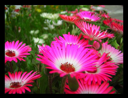 https://www.allabout-energy.com/Pphotos/Spring-Flowers.jpg