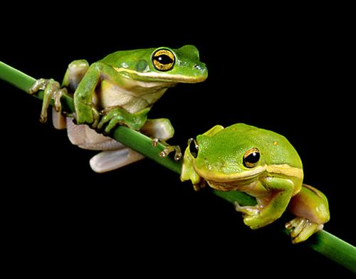 http://www.allabout-energy.com/Pphotos/Story-of-Two-Frogs.jpg