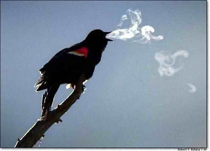 Bird_Breath_Tool